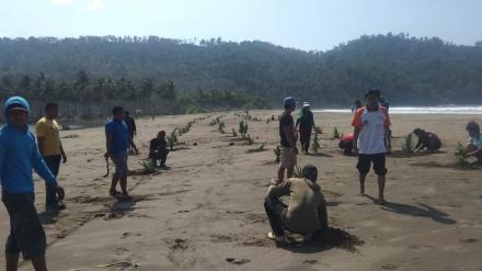Bakti Sosial Penanaman Pohon Pandan di Area Tepi Pantai Ngulungwetan Oleh Karang Taruna